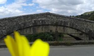 Ponte vecchio in fiore - Mastrangelo Samuele