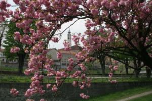 Primavera alla Venaria - Mortara Roberto