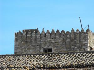 Un colombo tra i merli del Casale S.Pietro - Ajello Carmela