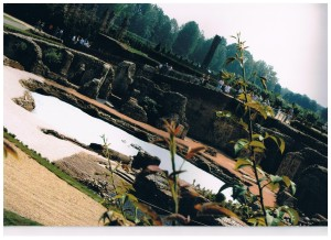 Giardini reali - Sparacello Vitale